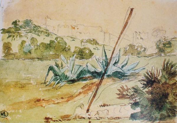 Paysage aux aloès dans la région de Tanger